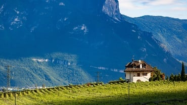 South-Tyrol Wine Route: Exclusive Tour