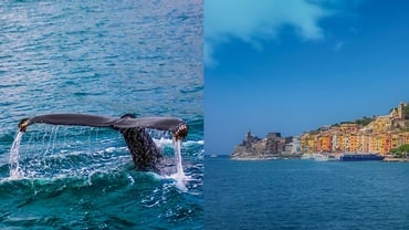 Dolphin and Whale Watching on the Ligurian coast