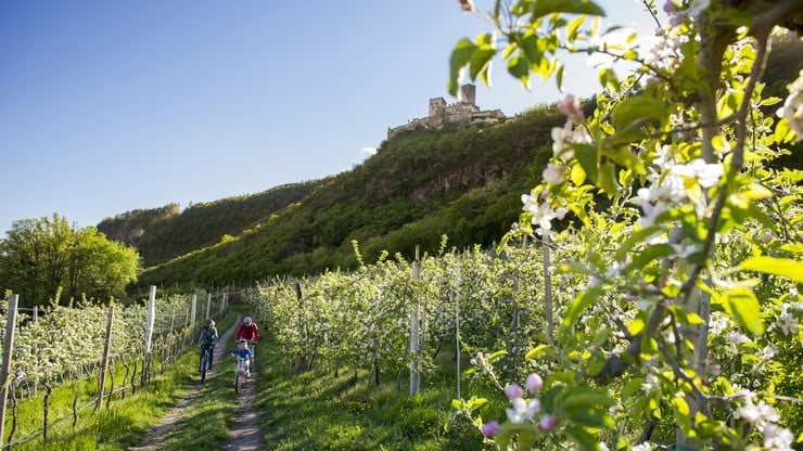Bike Tour: Through Orchards & Vineyards