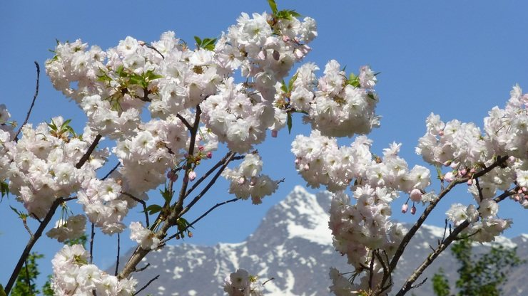 Blooming South Tyrol